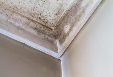 interior crown molding with mold damage